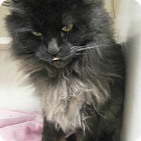 Adopt A Pet :: Baby - Cheboygan, MI