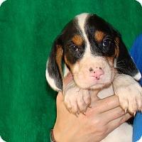 Adopt A Pet :: Dante - Oviedo, FL