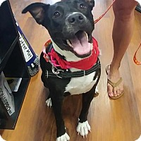 Terrier (Unknown Type, Medium) Mix Dog for adoption in Spotsylvania, Virginia - Hedda