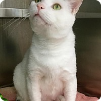 Adopt A Pet :: Whiskers - Webster, MA
