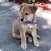 Adopt A Pet :: Bella Camden-Adopted! - Detroit, MI