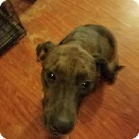 Adopt A Pet :: Bonnie - Crosby, TX