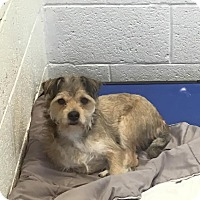 Adopt A Pet :: Manny - Miami, FL