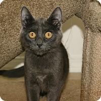 Adopt A Pet :: Quinn - Duncan, BC