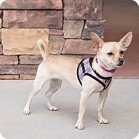 Adopt A Pet :: Kiki - Chandler, AZ