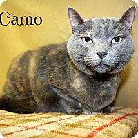 Adopt A Pet :: Camo - Melbourne, KY