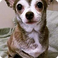 Adopt A Pet :: Keanu - Durham, NC