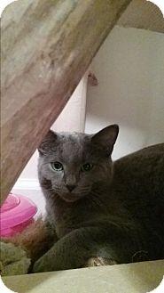 Domestic Shorthair Kitten for adoption in Cedar Springs, Michigan - Jajune
