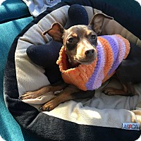 Adopt A Pet :: Mercy - Richmond, KY