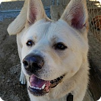 Adopt A Pet :: Fuji - Romoland, CA