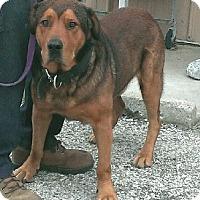 Adopt A Pet :: Moose - Aurora, IL