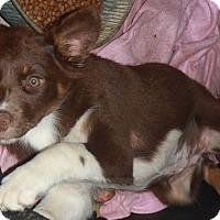 Adopt A Pet :: Trisha - Coventry, CT