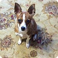 Adopt A Pet :: Lizzie (GA) - Atlanta, GA