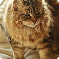 Adopt A Pet :: April - London, ON