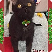 Adopt A Pet :: Glenn - Atco, NJ