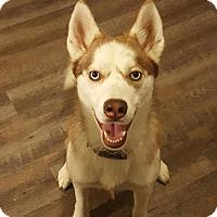 Adopt A Pet :: Trinity - Colonial Heights, VA