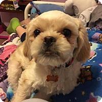 Adopt A Pet :: Junior - Gilberts, IL