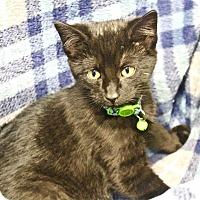 Adopt A Pet :: Erik - Lansing, KS