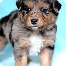 Adopt A Pet :: Oprah