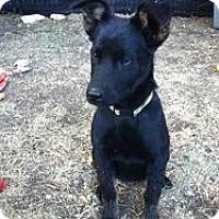Adopt A Pet :: Georgia - Saskatoon, SK