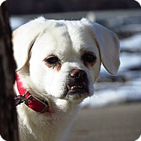 Adopt A Pet :: Jessie - Meridian, ID
