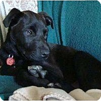Adopt A Pet :: Wally - PENDING! - kennebunkport, ME