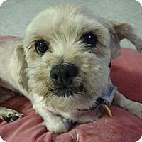 Adopt A Pet :: Babette - Valley Village, CA