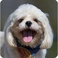Adopt A Pet :: Sabin - Providence, RI