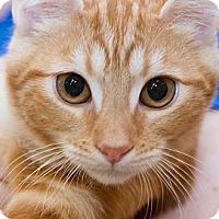 Adopt A Pet :: Cameo - Irvine, CA