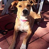 Adopt A Pet :: Tia - Long Beach, CA