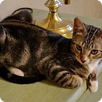Adopt A Pet :: Hobbs - Alvin, TX