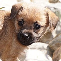 Adopt A Pet :: Petunia - La Habra Heights, CA