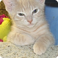 Adopt A Pet :: EVEREST - Acme, PA