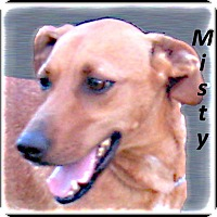Adopt A Pet :: Misty- Young/Sweet and Active - Marlborough, MA