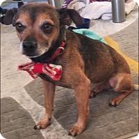 Adopt A Pet :: Oscar - calimesa, CA