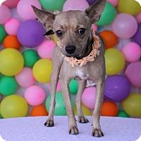 Adopt A Pet :: Frannie - Phoenix, AZ