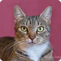 Adopt A Pet :: Ruthie - Millersville, MD