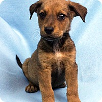 Adopt A Pet :: DAMIAN - Westminster, CO