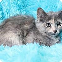 Adopt A Pet :: Venus - Muskegon, MI