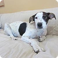 Adopt A Pet :: Finn - Ridgway, CO