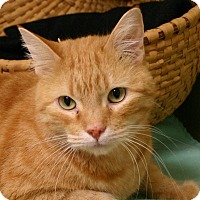 Adopt A Pet :: Garfield - Hastings, NE