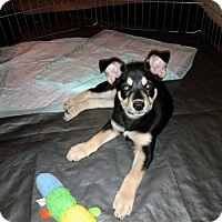Adopt A Pet :: **MINNIE - Peralta, NM