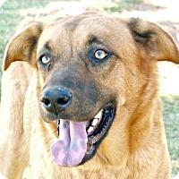 Adopt A Pet :: Taylor - Scottsdale, AZ