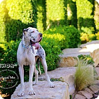 Adopt A Pet :: Thor - Lubbock, TX