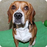 Adopt A Pet :: 23464 - Jack - Ellicott City, MD