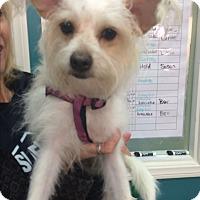 Adopt A Pet :: Joy - Thousand Oaks, CA