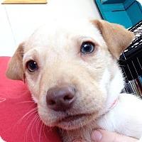 Adopt A Pet :: Norman - Brooklyn Center, MN
