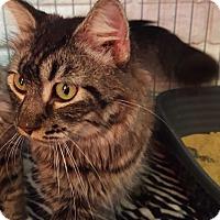 Adopt A Pet :: CARL - Phoenix, AZ