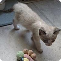 Adopt A Pet :: Izzy - Sterling Hgts, MI