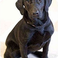 Adopt A Pet :: Prinsiss - Portland, OR